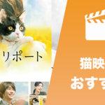 猫映画おすすめ