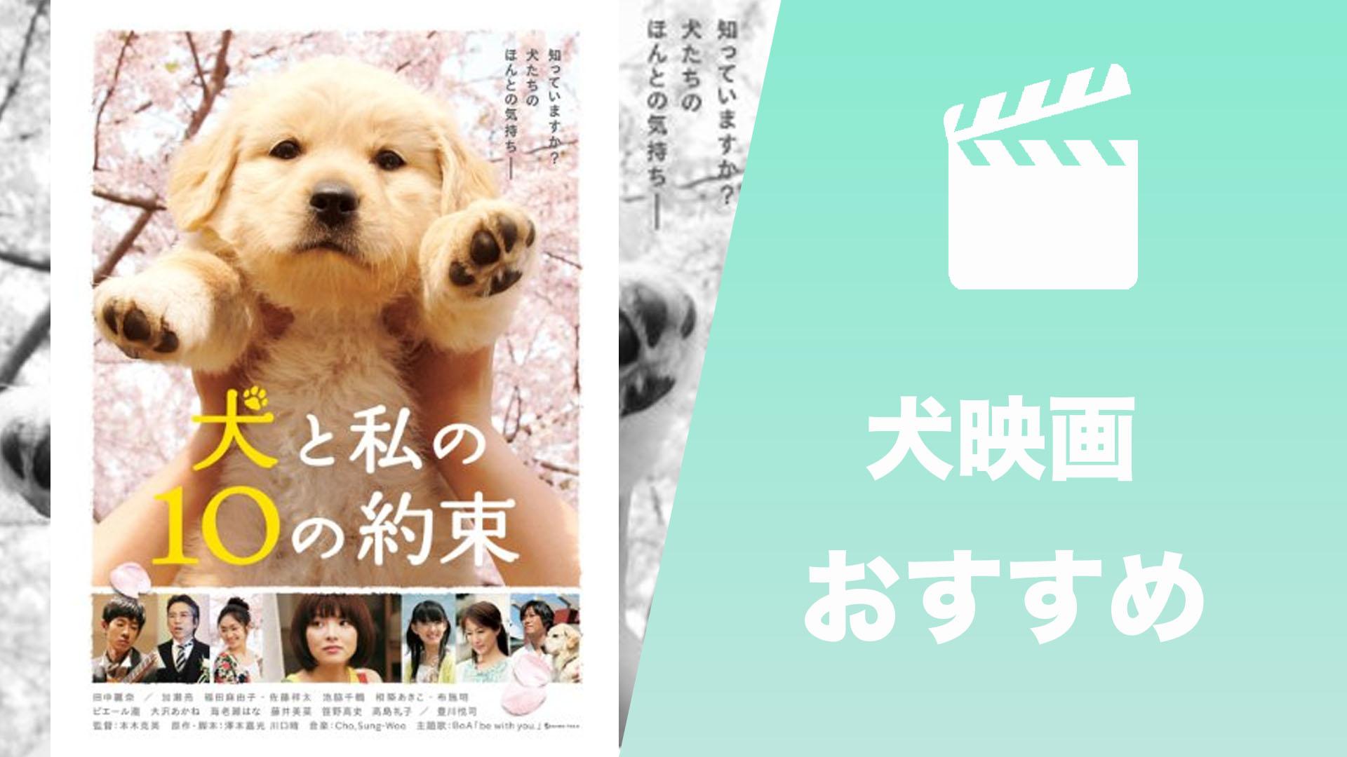 犬映画 おすすめ